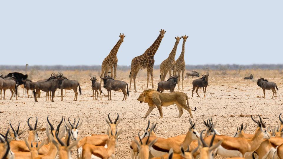 Animaux de Namibie