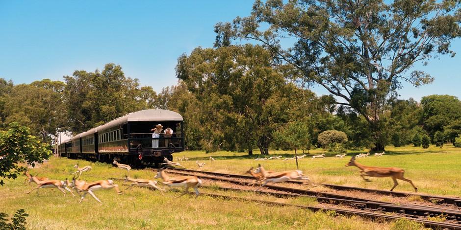 Train Rovos au milieu des springboks avec la voiture d'Observation