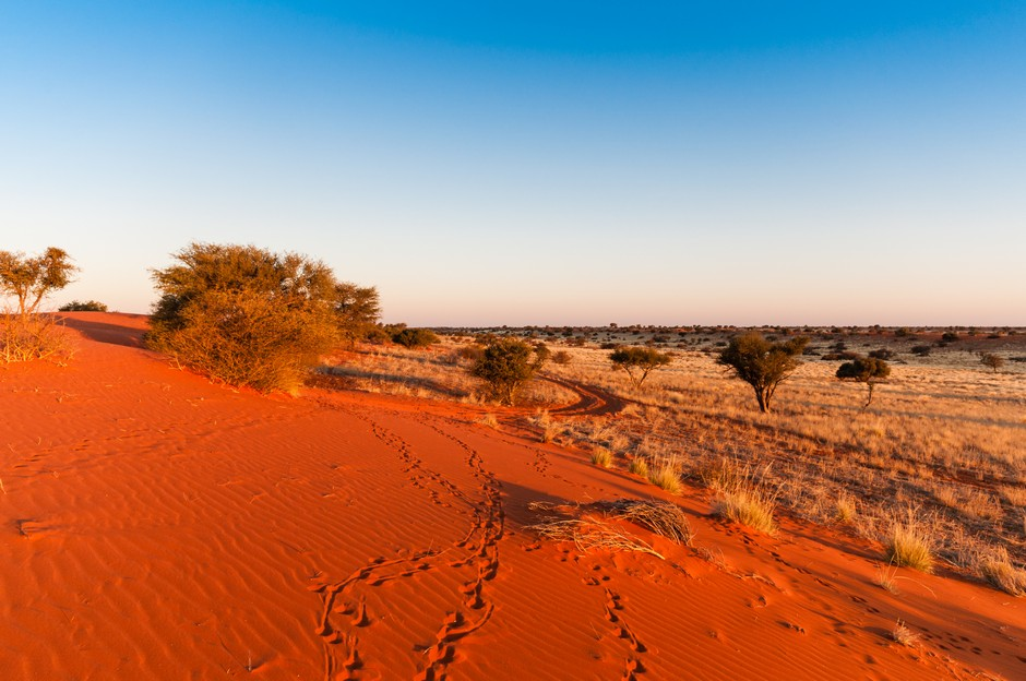 Désert de Kalahri