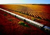 Train Rovos dans les vignes