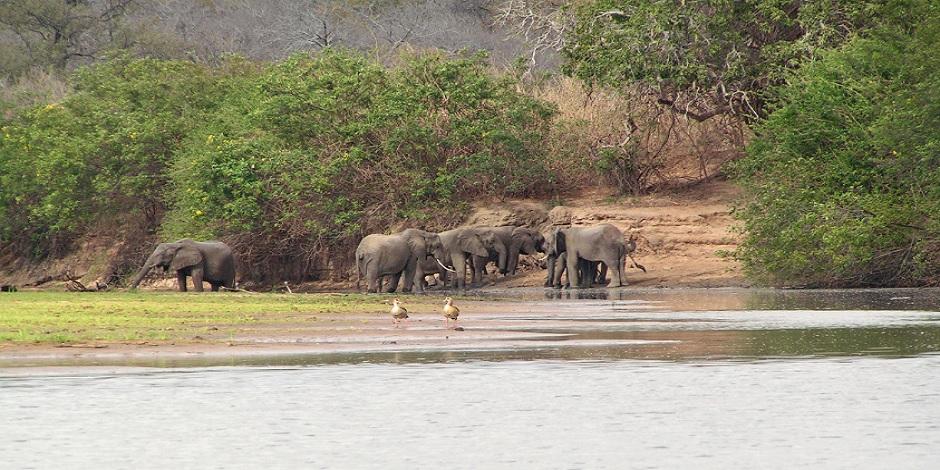 Elephants dans la réserve